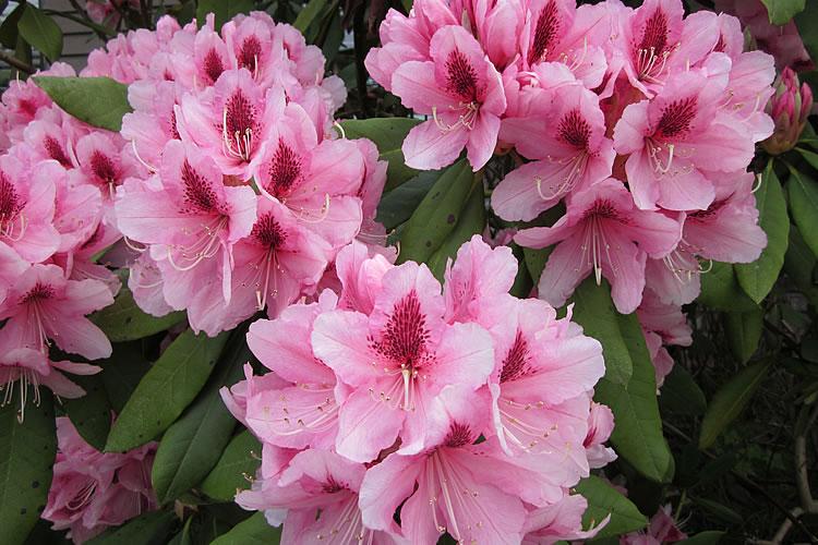 17-flowers-2